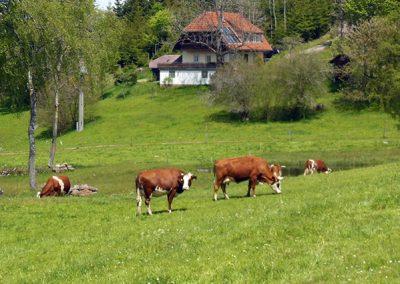 Zuckerbauerhof 2021014